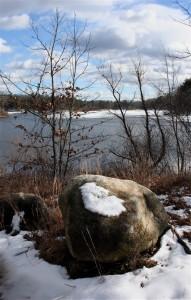 Shoreline at Mansfield Hollow