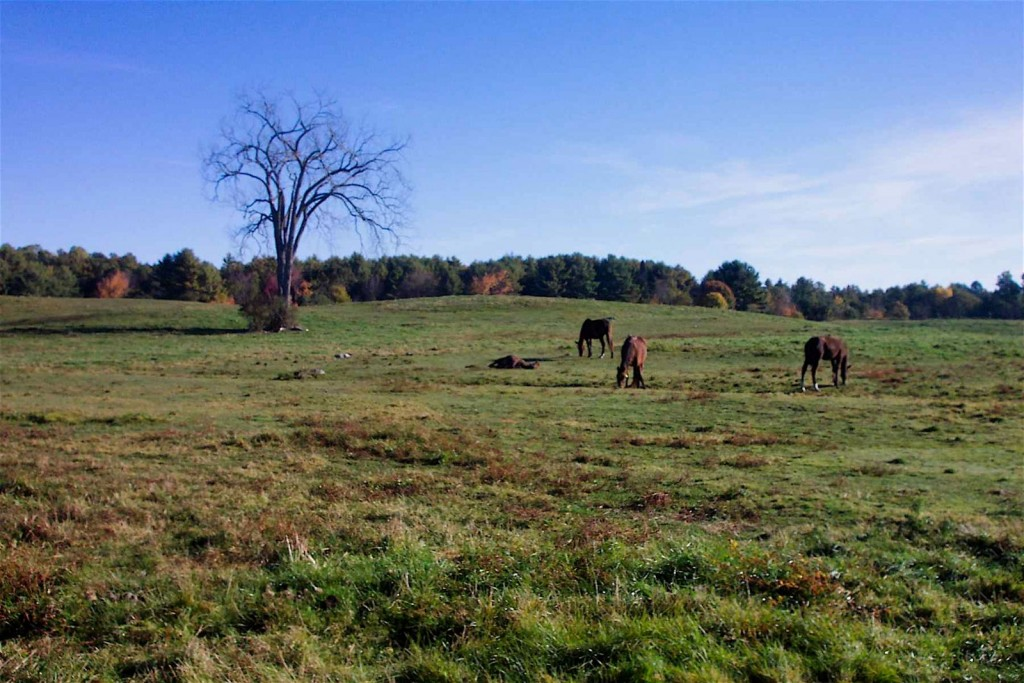 Horse pastures are often on drumlins underlain by lodgment till