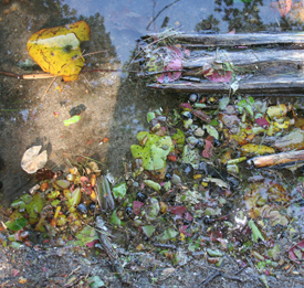 Ultra-clean water and plant detritus in Otter Pond, Standish, Maine created by low nutrient and high oxygen