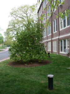 Tree next to building