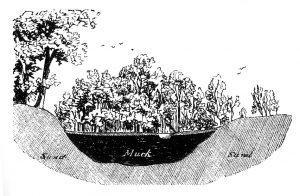 Cranberry Bog Etching